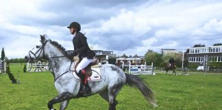 How To Prepare Your Horse for Show