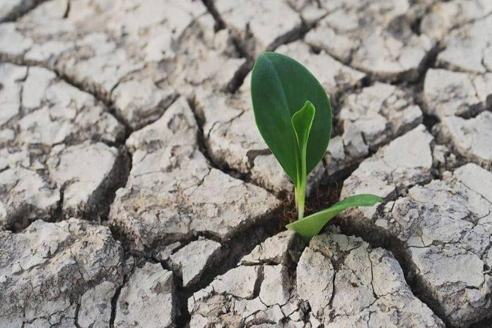 Reviving Drought Stressed Plants