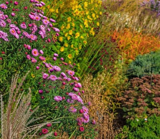 Plant for Great Fall Colors