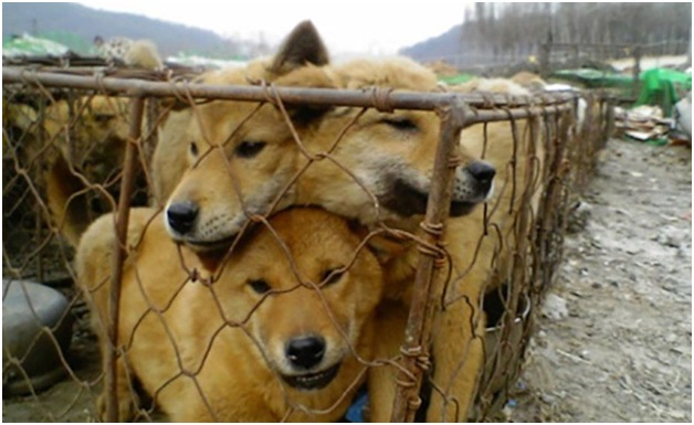 Dog Farm Bill