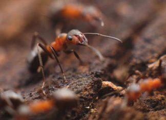 Termites existence