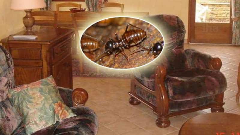 termites on furniture