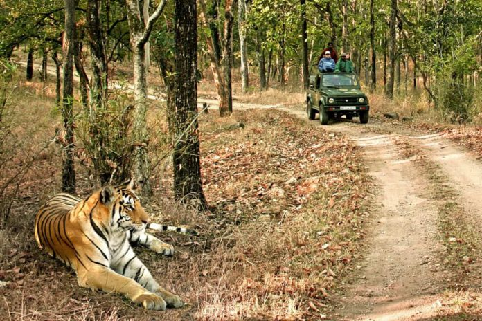 Wildlife Safari Tours
